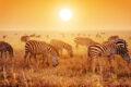 Il Parco Nazionale del Serengeti in Tanzania, il lato più selvaggio dell'Africa