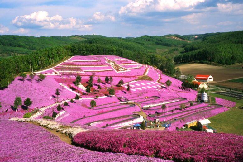 La Collina Rosa in Giappone: un tappeto di fiori nel cuore di Hokkaido